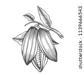 cocoa beans freehand drawing ... | Shutterstock .eps vector #1139666543