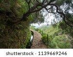 green path on madeira island | Shutterstock . vector #1139669246