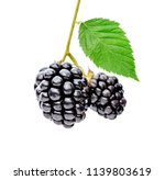 blackberry with leaves.... | Shutterstock . vector #1139803619
