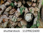 pile of firewood backgrounds... | Shutterstock . vector #1139822600