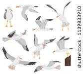Seagull Bird In Dufferent...