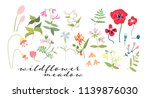 wild flower meadow illustration....   Shutterstock .eps vector #1139876030