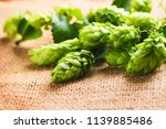 hop plant close up. hop over... | Shutterstock . vector #1139885486