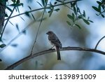 small bird perched on the... | Shutterstock . vector #1139891009