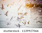 seagull flying. flock of... | Shutterstock . vector #1139927066