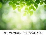 closeup nature view of green... | Shutterstock . vector #1139937530