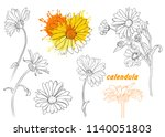 linear vector drawing calendula ... | Shutterstock .eps vector #1140051803