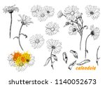 a set of sketches of calendula.... | Shutterstock .eps vector #1140052673