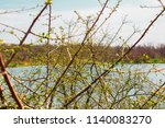 a young bush in the nature ... | Shutterstock . vector #1140083270