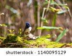 cyanomelana of tsudokado | Shutterstock . vector #1140095129