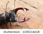 beetle deer close up outdoor on ... | Shutterstock . vector #1140116618