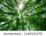 forest trees. nature green wood ... | Shutterstock . vector #1140141470