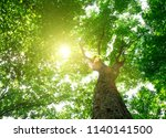 forest trees. nature green wood ... | Shutterstock . vector #1140141500