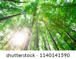 forest trees. nature green wood ... | Shutterstock . vector #1140141590