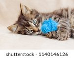 Stock photo a small striped kitten is playing with a blue clue of yarn 1140146126
