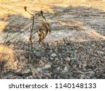 dead tree on cracked clay... | Shutterstock . vector #1140148133