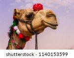 a camel beauty | Shutterstock . vector #1140153599