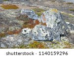 stony background with moss | Shutterstock . vector #1140159296