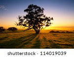 sun rises over the clare valley ... | Shutterstock . vector #114019039
