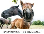 curious young  horse is looking ... | Shutterstock . vector #1140222263