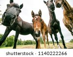 curious horses looking at... | Shutterstock . vector #1140222266