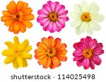 Collection Of Flowers On A...