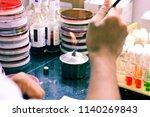 microbiological inoculation...   Shutterstock . vector #1140269843