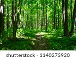 trail through lush green forest. | Shutterstock . vector #1140273920