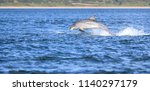 dolphin have in natural... | Shutterstock . vector #1140297179