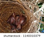 into the nest of nightingale | Shutterstock . vector #1140310379