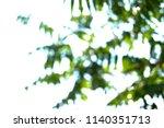 unfocused green fern palm... | Shutterstock . vector #1140351713