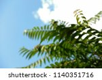 unfocused green fern palm... | Shutterstock . vector #1140351716