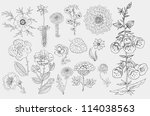 set flowers hand drawn vector... | Shutterstock .eps vector #114038563
