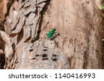 emerald ash borer looking for a ... | Shutterstock . vector #1140416993