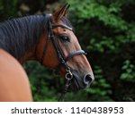 dressage horse portrait in... | Shutterstock . vector #1140438953