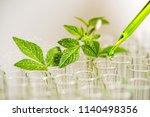 pipette over test tube dropping ... | Shutterstock . vector #1140498356