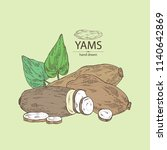 yams  tuber of yams  leaves and ... | Shutterstock .eps vector #1140642869
