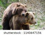 big brown bears mating in...   Shutterstock . vector #1140647156