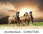 Stock photo horses in summer 114067333
