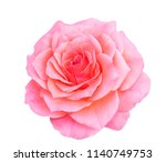 Stock photo blooming rose soft pink rose flower isolated on white 1140749753