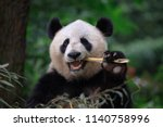 panda bear eating bamboo ... | Shutterstock . vector #1140758996