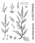 ink sketch of agrimony plant ... | Shutterstock . vector #1140799850