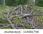 Dried Branches And Trunks Of...