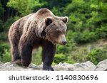 european brown bear in a forest....   Shutterstock . vector #1140830696