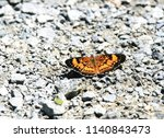 Silvery Checkerspot Butterfly