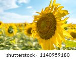 sunny day photo with sunflower... | Shutterstock . vector #1140959180