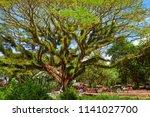 jawatan benculuk  indonesia  ... | Shutterstock . vector #1141027700