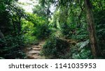 view of tropical asian jungle... | Shutterstock . vector #1141035953