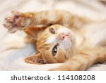 Stock photo cute playful orange kitten 114108208
