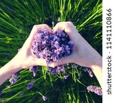 hands holding lavender flowers... | Shutterstock . vector #1141110866